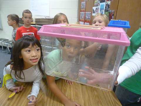 students watching caterpillars