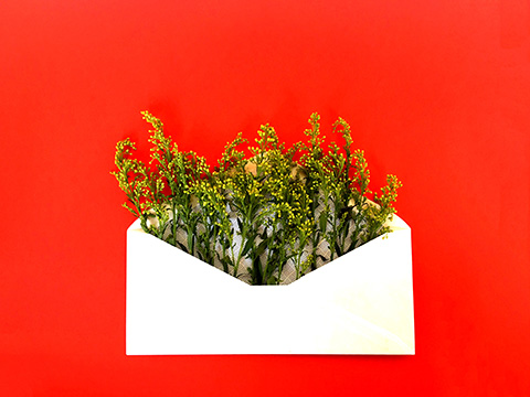 envelope with plant