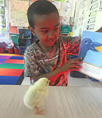 student reading to chick